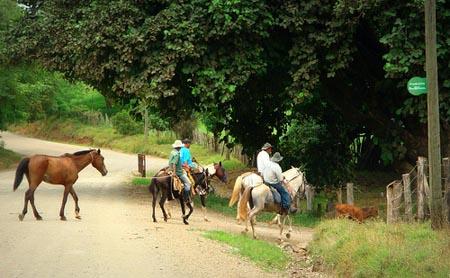 Guanacaste Men on Horses