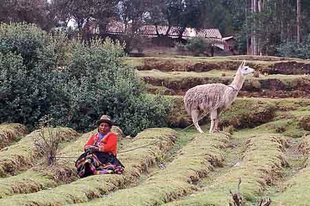 Peruvian Woman with Llama in Field