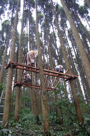 Building Treehouse in Gankoyama