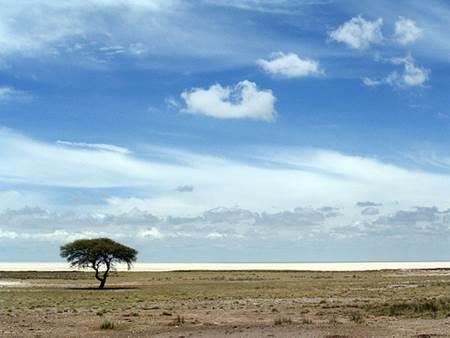 Etosha Tree