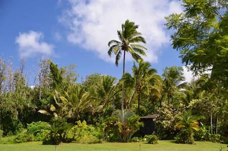 Kalani Hawaii