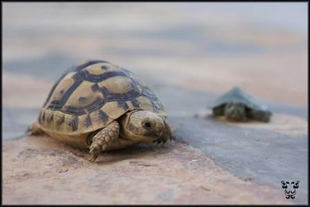 Oman Sea Turtles