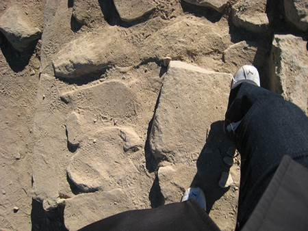 Sinai Trek