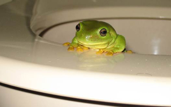 Tale-of-the-Toilet-Frog