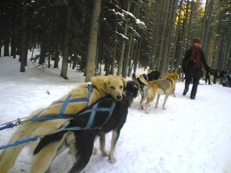 Woman with Sled Dogs
