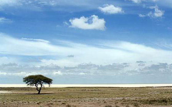 Etosha-Tree