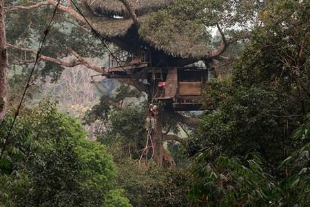 Laos Gibbon Treehouse Experience