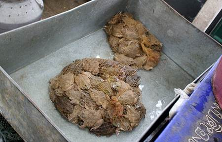 Live Toads in Nets