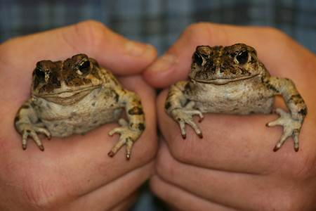 Two Toads