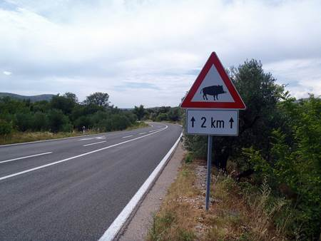 Boar Crossing Sign