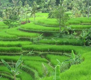 Bali and Java Tour
