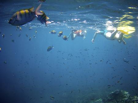 Snorkeling in Oso Peninsula