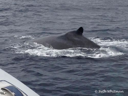 Whale near Boat Cabo San Lucas