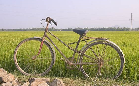 Bike at Ricefield