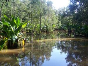 Madagascar Swamp