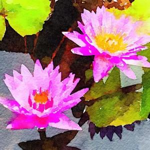 Lotus Waterlogue