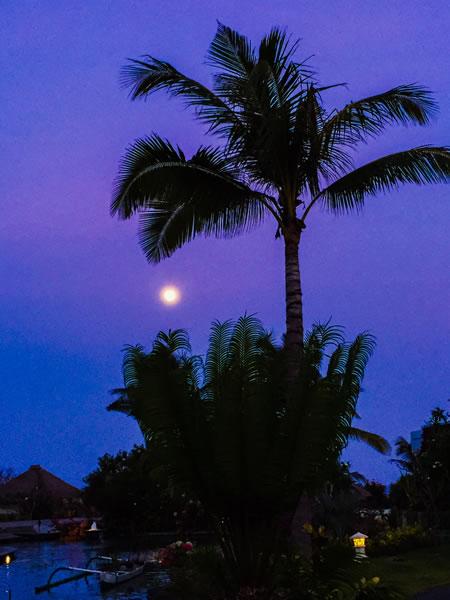 Kauai Palm Tree