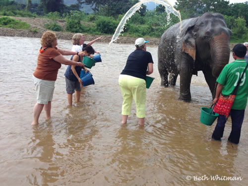 Washing Elephants Thailand